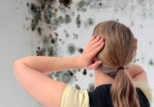 South Florida Mold Removal